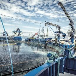 Servicebåter Frøy