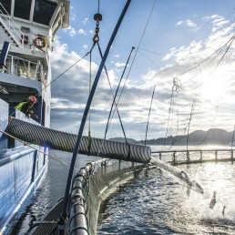 Skånsom behanding av fisk Frøy